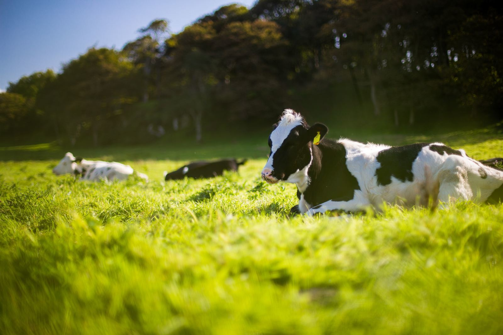 vache_vignette_agriculture2_andy-kelly-401394.jpg