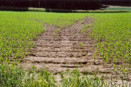 image Mais_Erosion016.jpg (2.0MB)