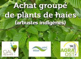 achatgroupedeplantsdehaiescommandepour_achat-gal.jpg