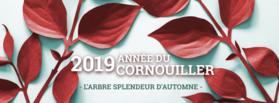 distributiongratuiredarbres_rw-2019.png