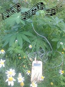 ecoutedelamusiquedesplantes_image_ecoutedelamusiquedesplantes_musique-des-plantes-partition.jpg