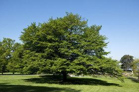 larbresoustoutessesformes_arbre-arbre-.jpg